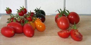 Tomatenvielfalt im eigenen Garten