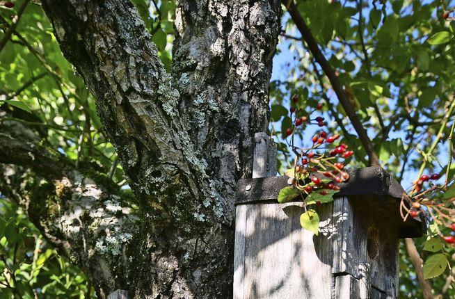Nistkasten im Apfelbaum
